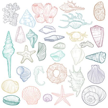 hand drawn vector seashells