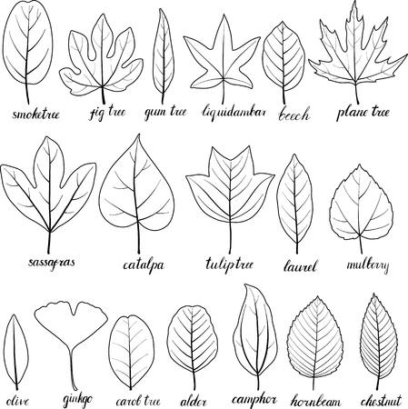 feuilles de vecteur de différents arbres isolés sur fond blanc, illustration dessinée à la main