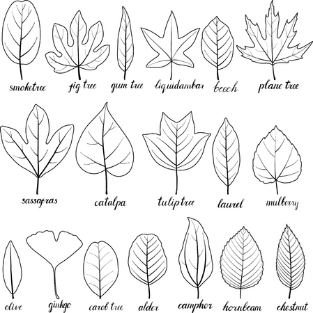vector leaves of different trees isolated at white background, hand drawn illustration