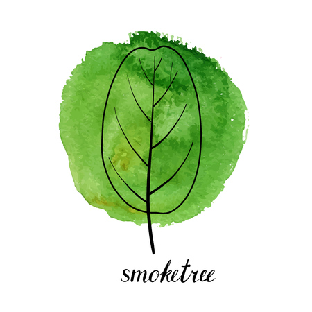 vector leaf of smoketree at green watrcolor paint stains, hand drawn illustration  イラスト・ベクター素材