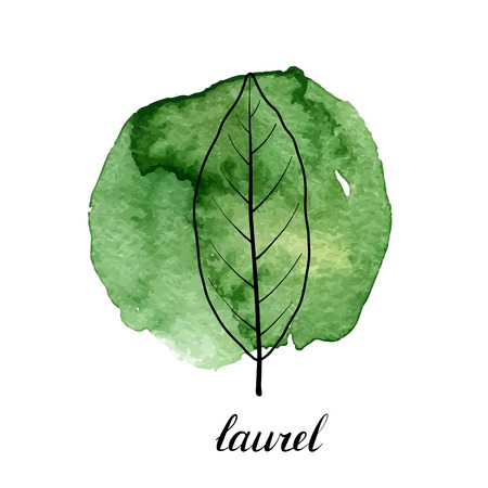 vector leaf of laurel tree at green watrcolor paint stains, hand drawn illustration