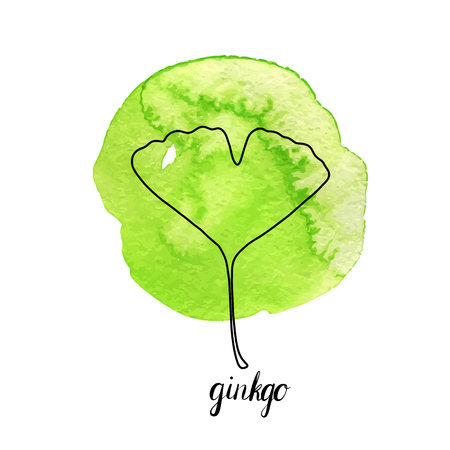 vector leaf of gingko tree at green watrcolor paint stains, hand drawn illustration