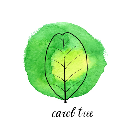 vector leaf of carob tree at green watrcolor paint stains, hand drawn illustration