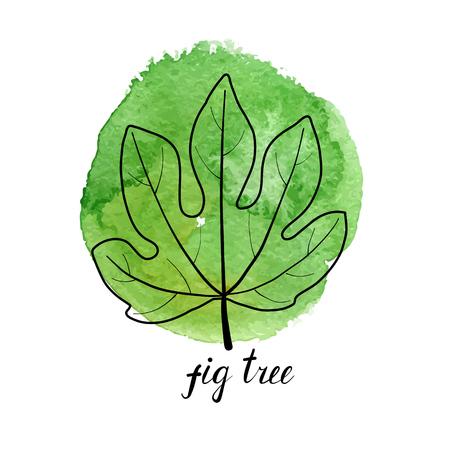 wektor liść drzewa figowego w zielonych plamach farby watrcolor, ręcznie rysowane ilustracja