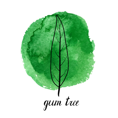 vector leaf of gum tree at green watrcolor paint stains, hand drawn illustration