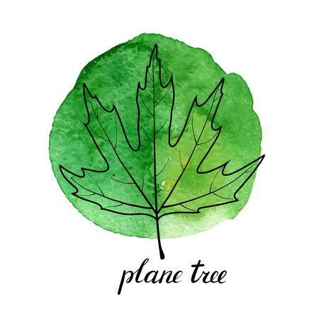 vector leaf of plane tree at green watrcolor paint stains, hand drawn illustration 스톡 콘텐츠 - 110186487