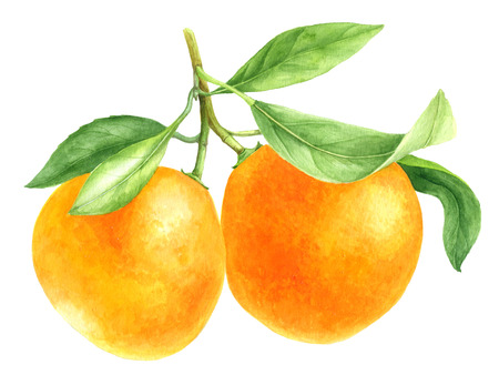 orange tangerine drawing in watercolor