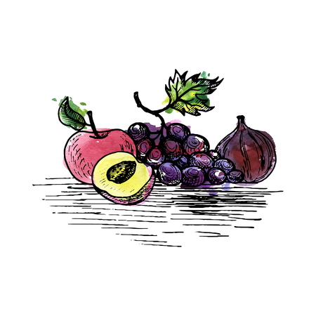 vector ink drawing grape