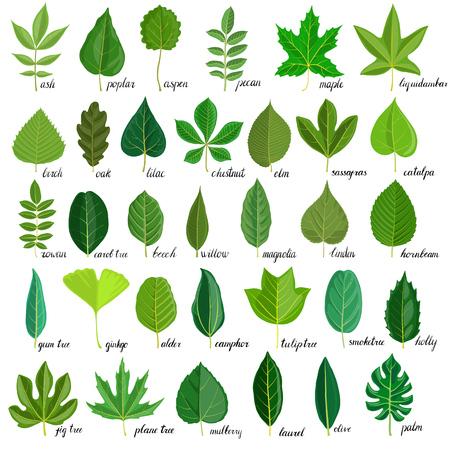 vector, conjunto, de, árbol, hojas
