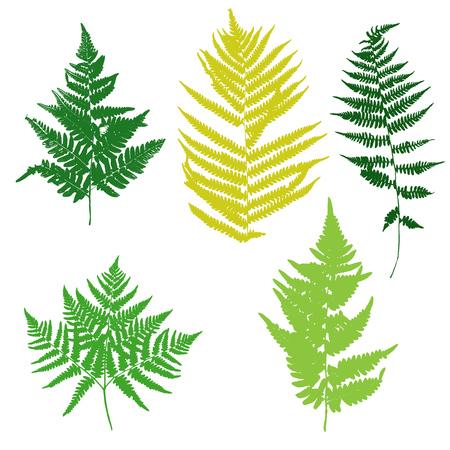 vector fern leaves silhouettes, botanical illustration, floral elements 向量圖像