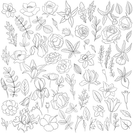 flowers and leaves, vector floral set of isolated elements , hand drawn design elements  イラスト・ベクター素材