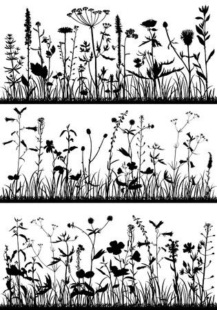 Background with drawing herbs and flowers Stockfoto
