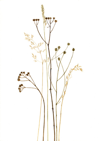 dry plants and flowers drawing in watercolor Stock Photo
