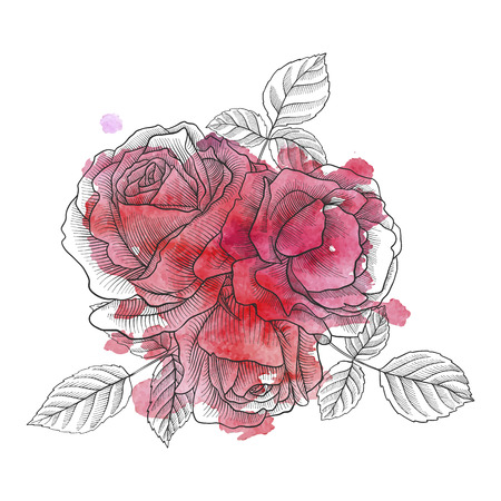 vintage vector floral composition with flowers, buds and leaves of roses at red watercolor background, imitation of engraving, hand drawn design element Ilustração