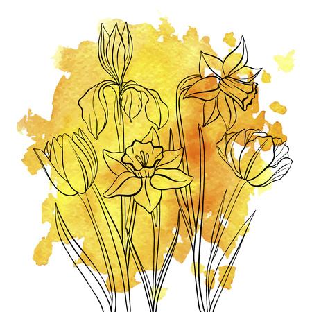 Vektorzeichnung Blumen von Tulpen. Iris und Narzisse auf gelbem Aquarellhintergrund, Blumenelement, handgezeichnete Illustration