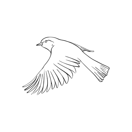Vector line drawing flying bird, sketch of sparrow, hand drawn songbird, isolated nature design element