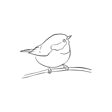 Vector line drawing bird sitting at tree branch, sketch of sparrow, hand drawn songbird, isolated nature design element