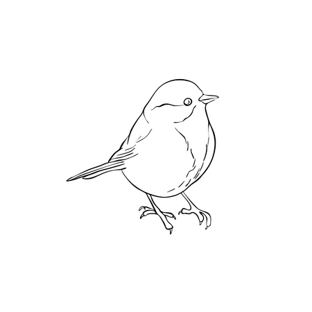 Vector line drawing bird sitting at tree branch, sketch of titmouse, hand drawn songbird, isolated nature design element