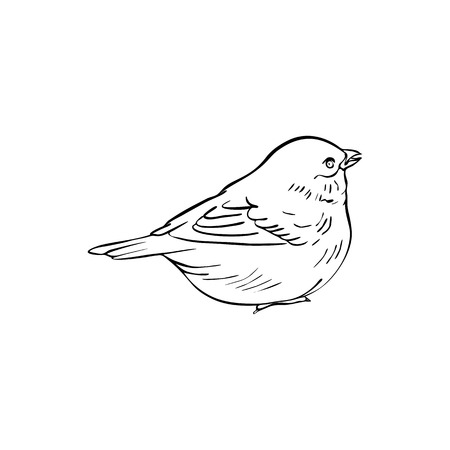 Vector line drawing bird sitting at tree branch, sketch of sparrow, hand drawn songbird, isolated nature design element Stock Illustratie