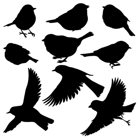 Vector silhouettes of birds, hand drawn songbirds, isolated nature design elements