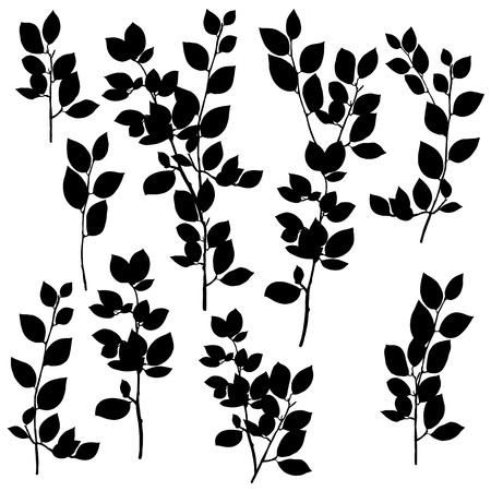 vector silhouettes drawing branches of breaking buckthorn with leaves, hand drawn illustration