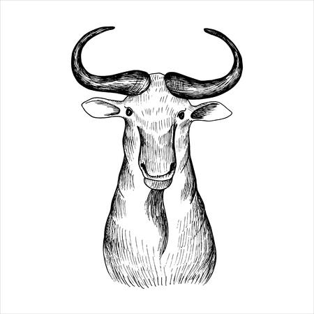 vector hand drawn head of bizon Reklamní fotografie