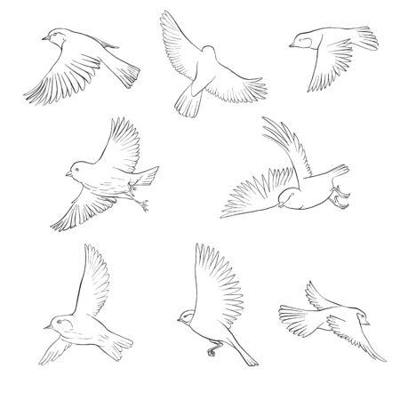 vector pájaro volador