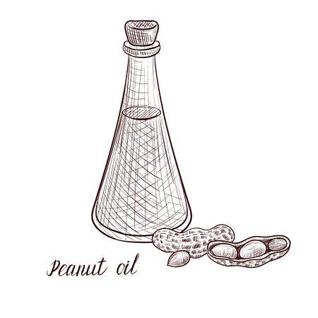 vector drawing peanut oil