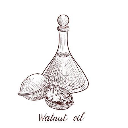 vector drawing walnut oil