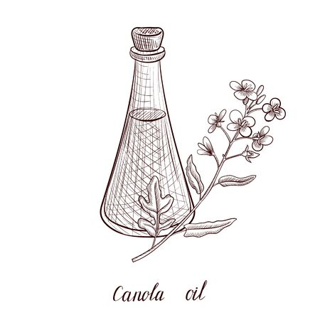 vector drawing canola oil