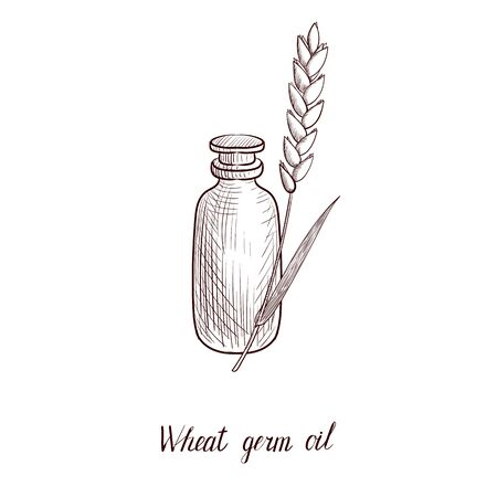 vector drawing wheat germ oil