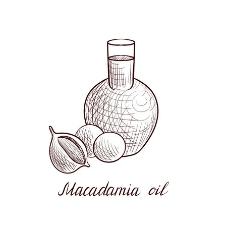 vector drawing macadamia oil