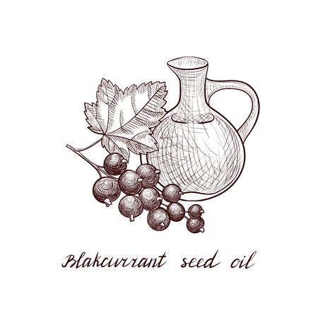 vector drawing blackcurrant seed oil Çizim