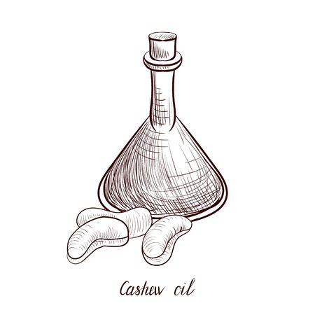 vector drawing cashew oil