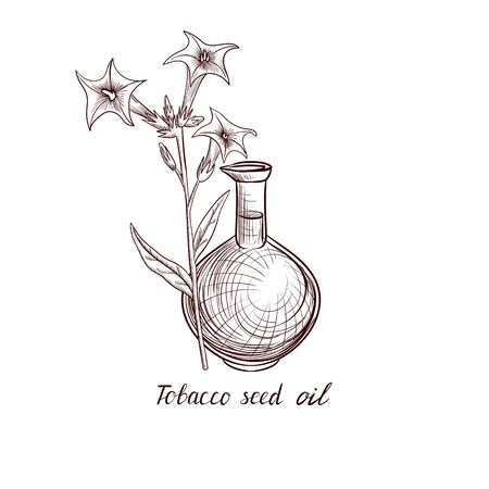 vector drawing tobacco seed oil