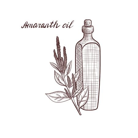 vector drawing amaranth oil