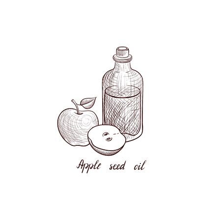 vector drawing apple seed oil