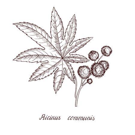 pianta di ricino disegno vettoriale