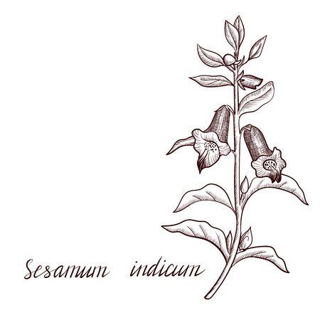 dibujo vectorial planta de sésamo