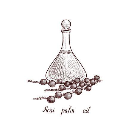 vector drawing acai palm oil