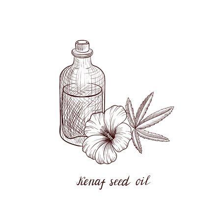 vector drawing kenaf seed oil