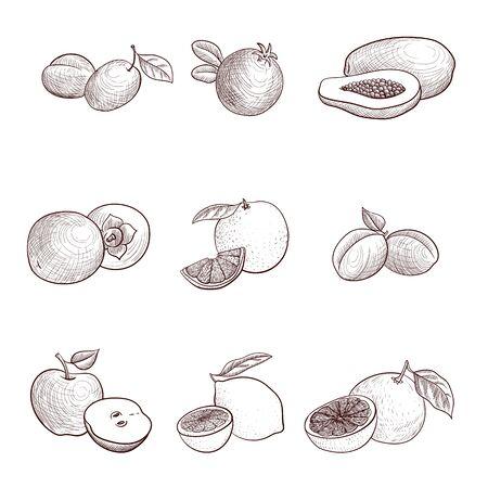 vector drawing vintage fruits