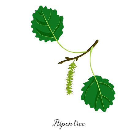 vector drawing branch of aspen tree