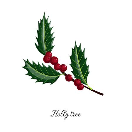 vector drawing branch of holly tree Ilustração