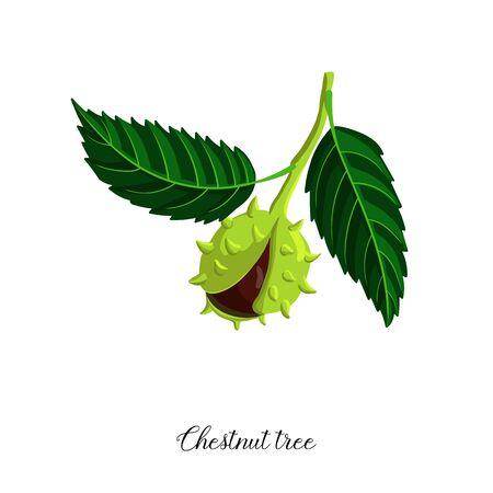 vector drawing branch of chestnut tree