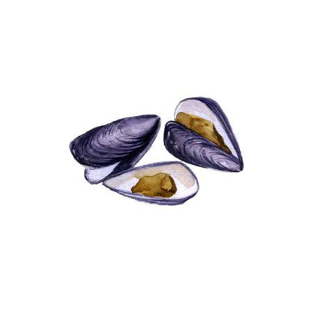 watercolor drawing mussels Stock fotó