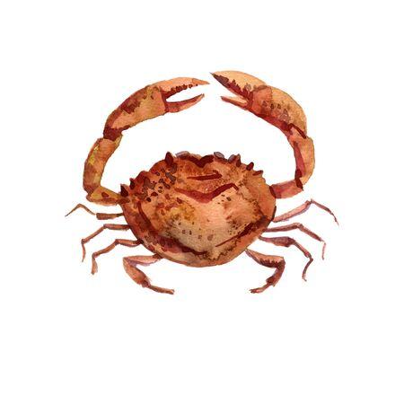 watercolor drawing crab