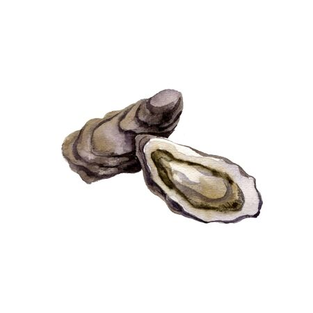 watercolor drawing oysters