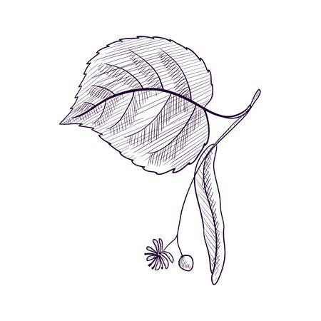 disegno vettoriale ramo di tiglio