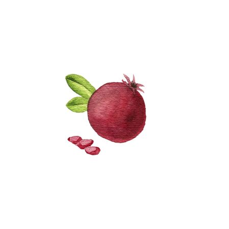 watercolor drawing pomegranate and seeds, hand drawn illustration Stok Fotoğraf